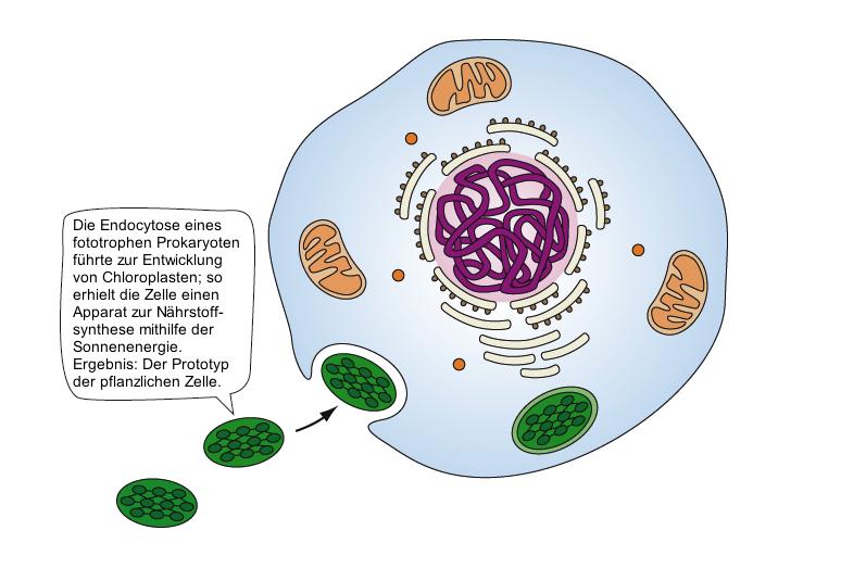 Biologie Cytologie
